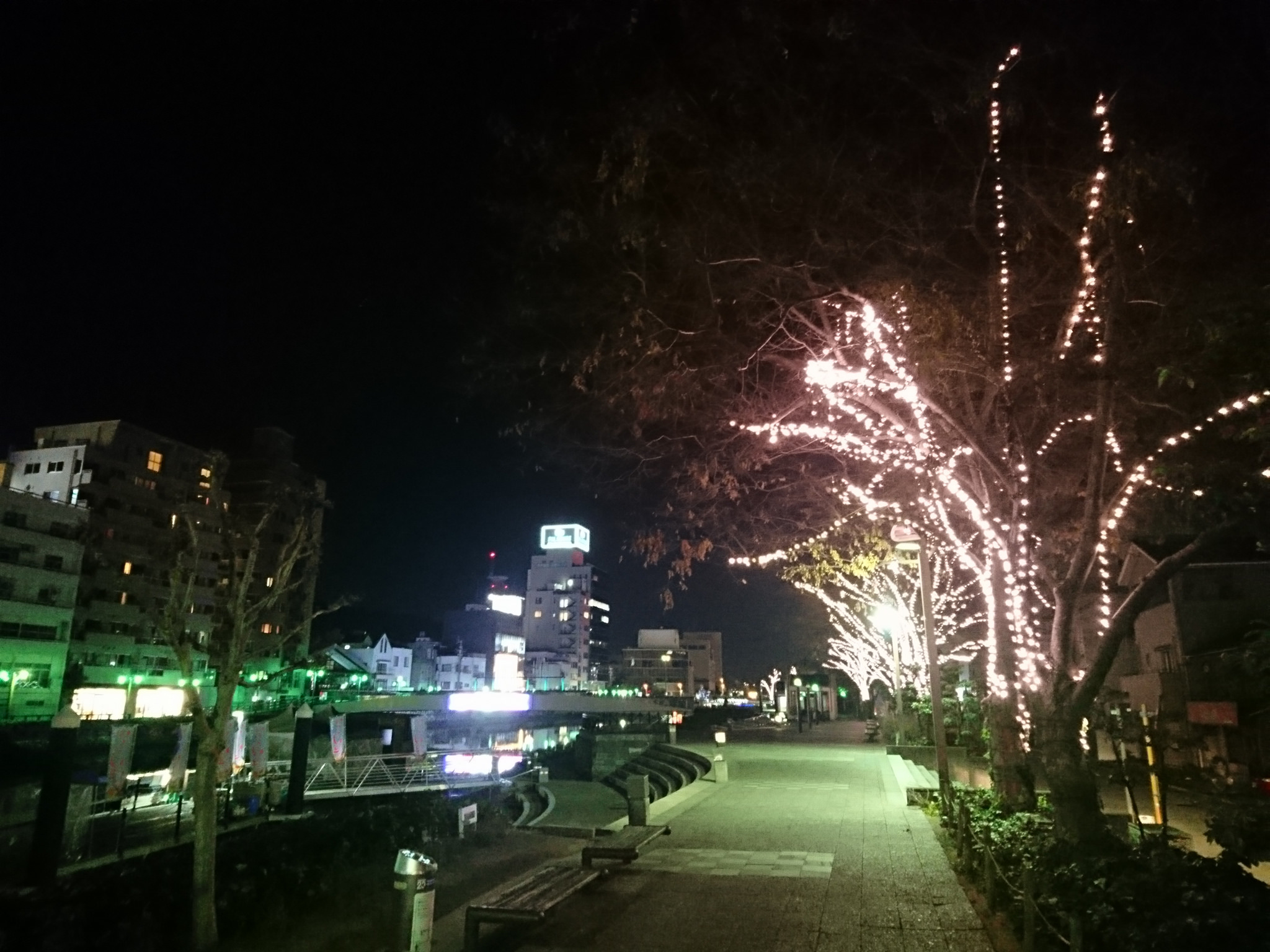 Iwaki Hikari no Sakura (Light Cherry Blossoms)