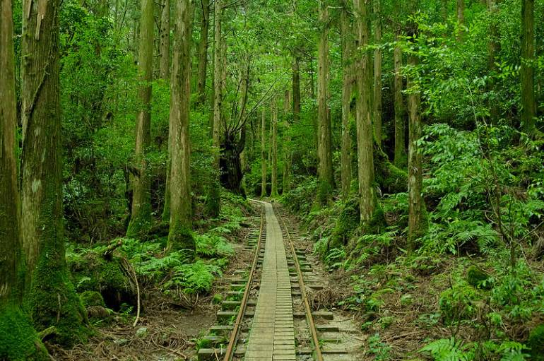 Kagoshima Yakushima Island