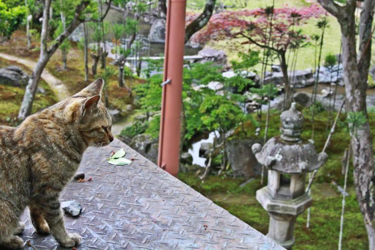 Philosopher's Path Cat