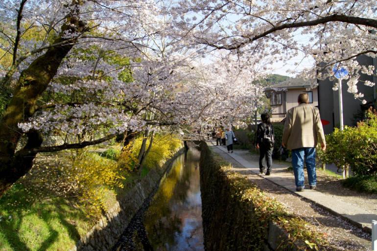 Philosopher's Path Kyoto Spring
