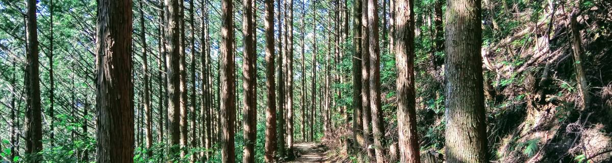 Sacred Pilgrimages: Hiking the Kumano Kodo