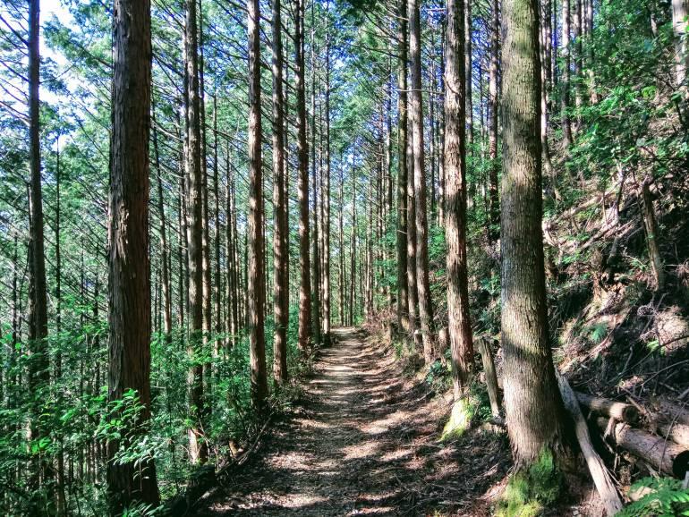 kumano kodo forest