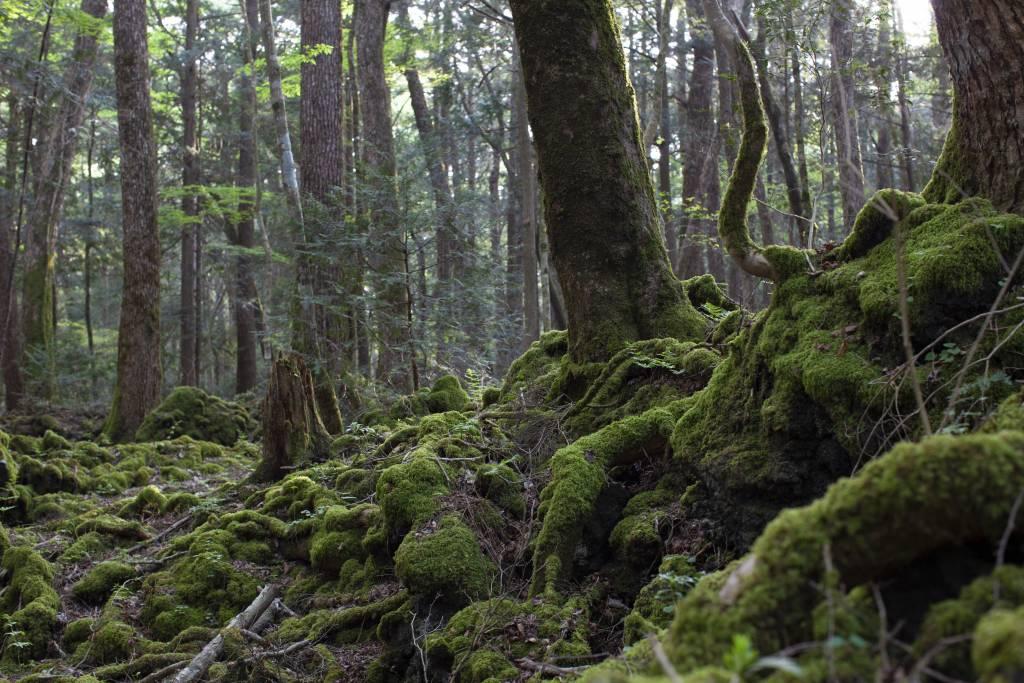 Aokigahara Jyukai aka Suicide Forest