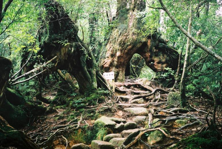 how to get to Yakushima Forest