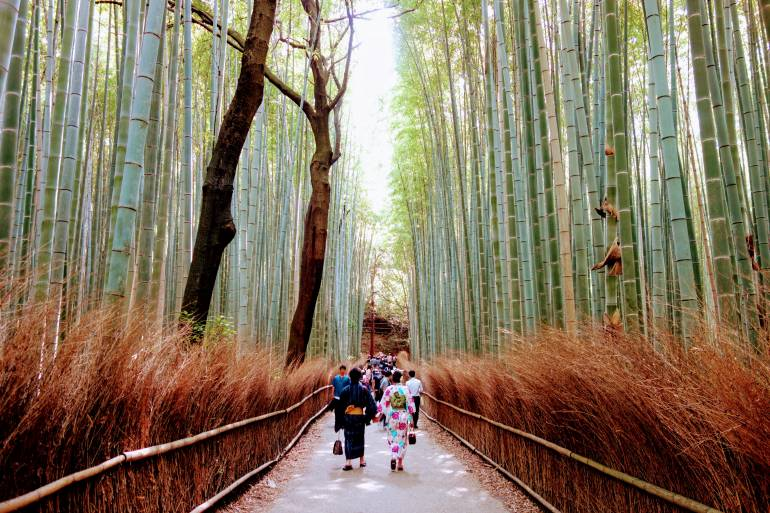 Arashiyama Bamboo Forest Kyoto kyoto accommodation