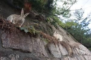Rabbit Island ledge