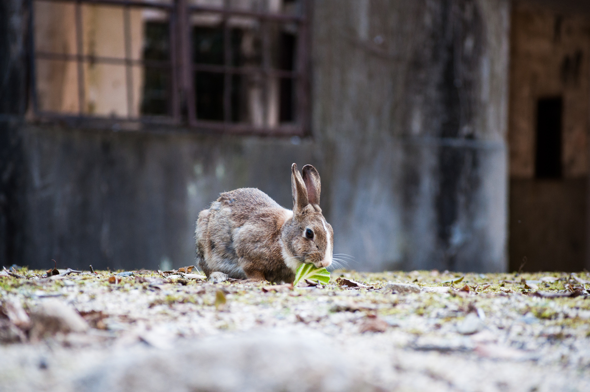 The Cutest Place In Japan A Guide To Visiting Rabbit Island Japan Cheapo