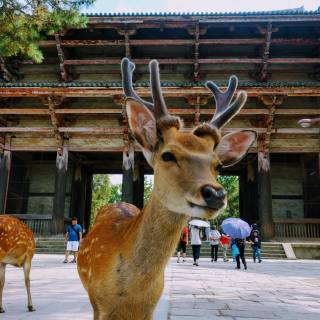 Escape to Nara: Top Things to Do for a Dream Day Trip