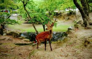 Nara Deer Park