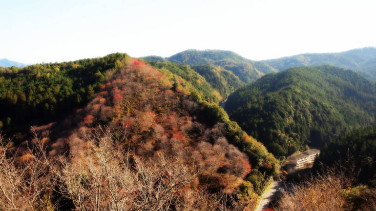 Yoshino Autumn