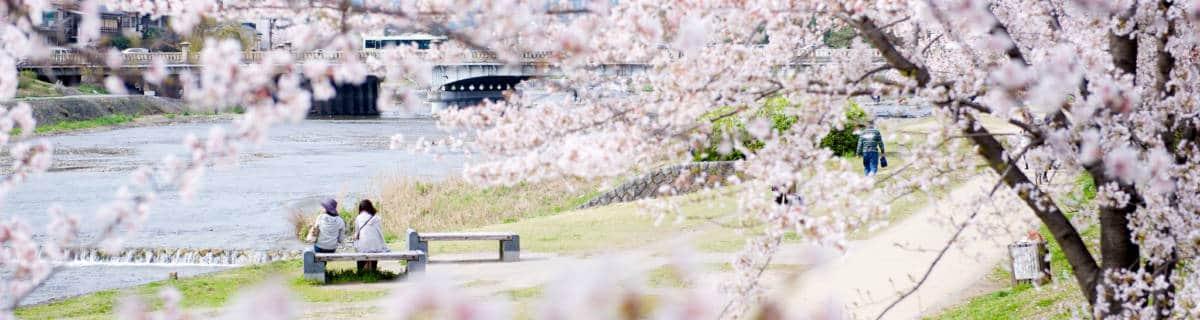 Cherry Blossom in Kyoto: The 15 Best Sakura Spots