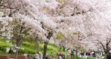 Sakuranomiya Osaka
