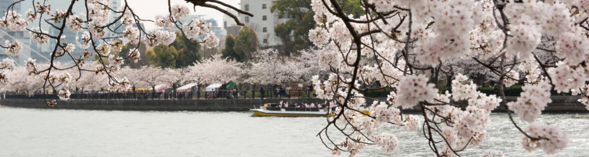 8 Cherry-Picked Cherry Blossom Spots in Osaka