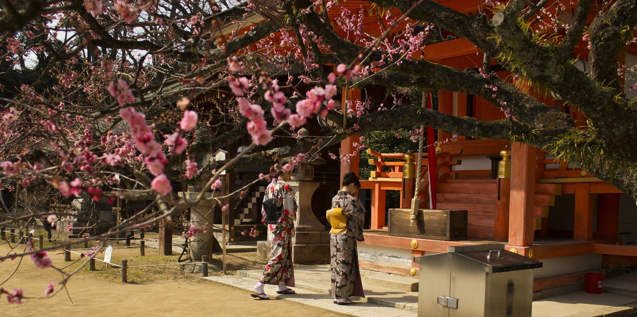 Baikasai Plum Blossom Festival