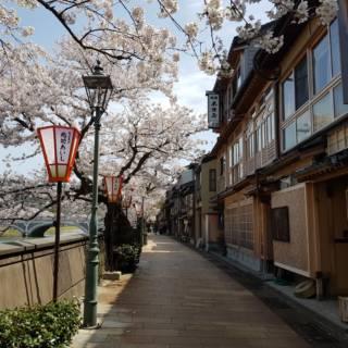 Kanazawa's Best Cherry Blossom Spots