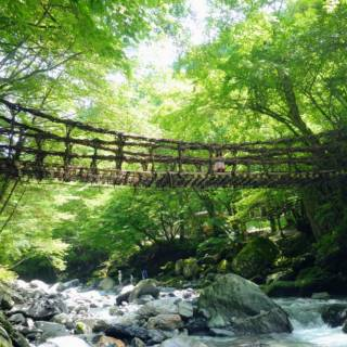Long-Distance 1- and 2-Day Bus Tours Around Japan