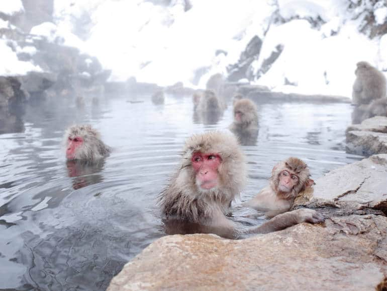 japan national parks snow monkeys