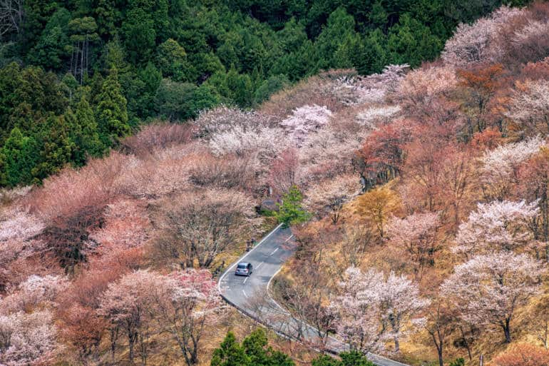 japan national parks - sakura mountain road