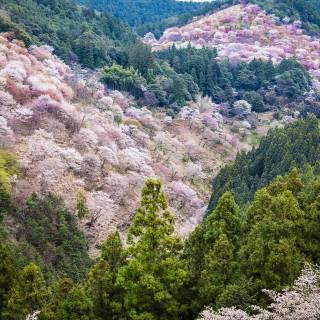 Yoshinoyama (Mount Yoshino)