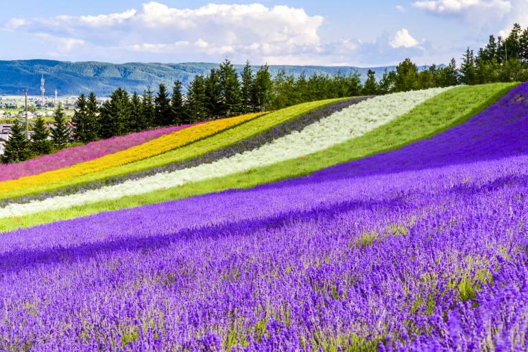 flower fields, things to do in Hokkaido and Tohoku regions