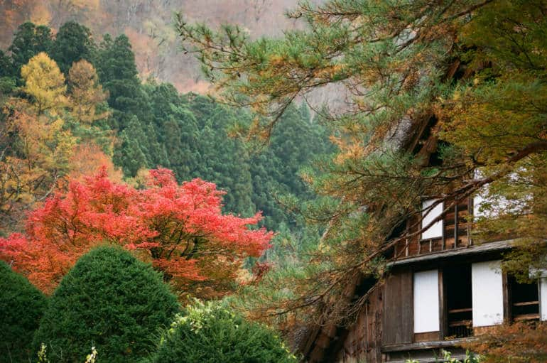 shirakawago autumn leaves