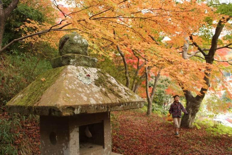 osaka autumn leaves