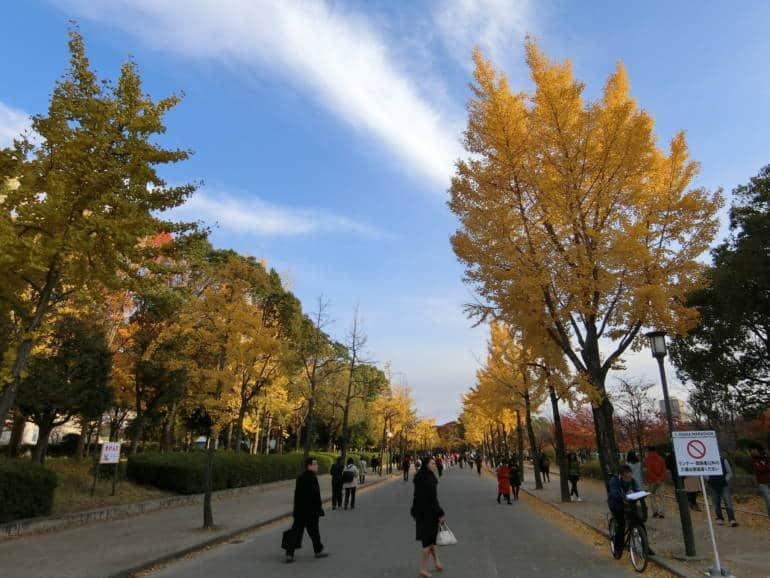 osaka castle autumn