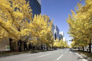 Midosuji Avenure autumn leaves