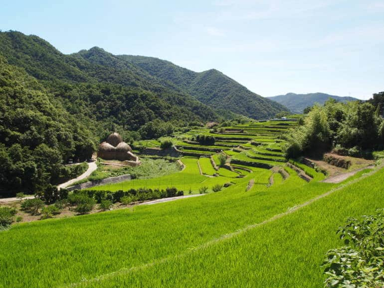 Shodoshima terraced rice fields