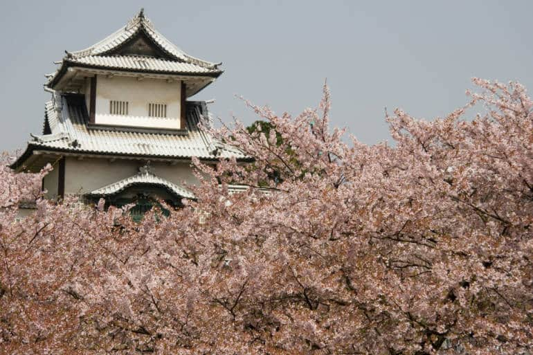 kanazawa cherry blossoms sakura