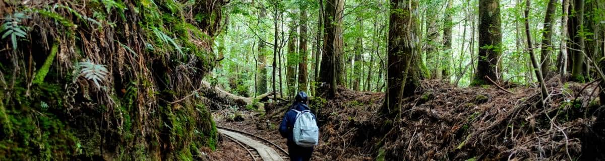 Journey to Jomon Sugi: Yakushima's Oldest Tree
