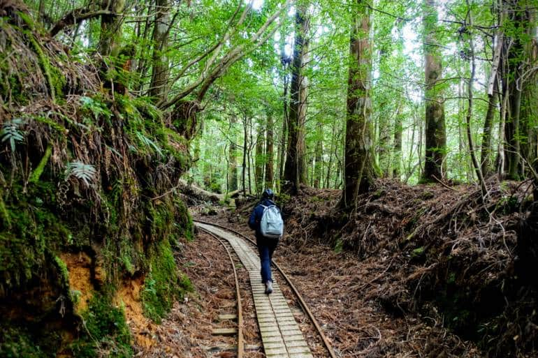 Yakushima - Jomon Sugi - Anbo Trail