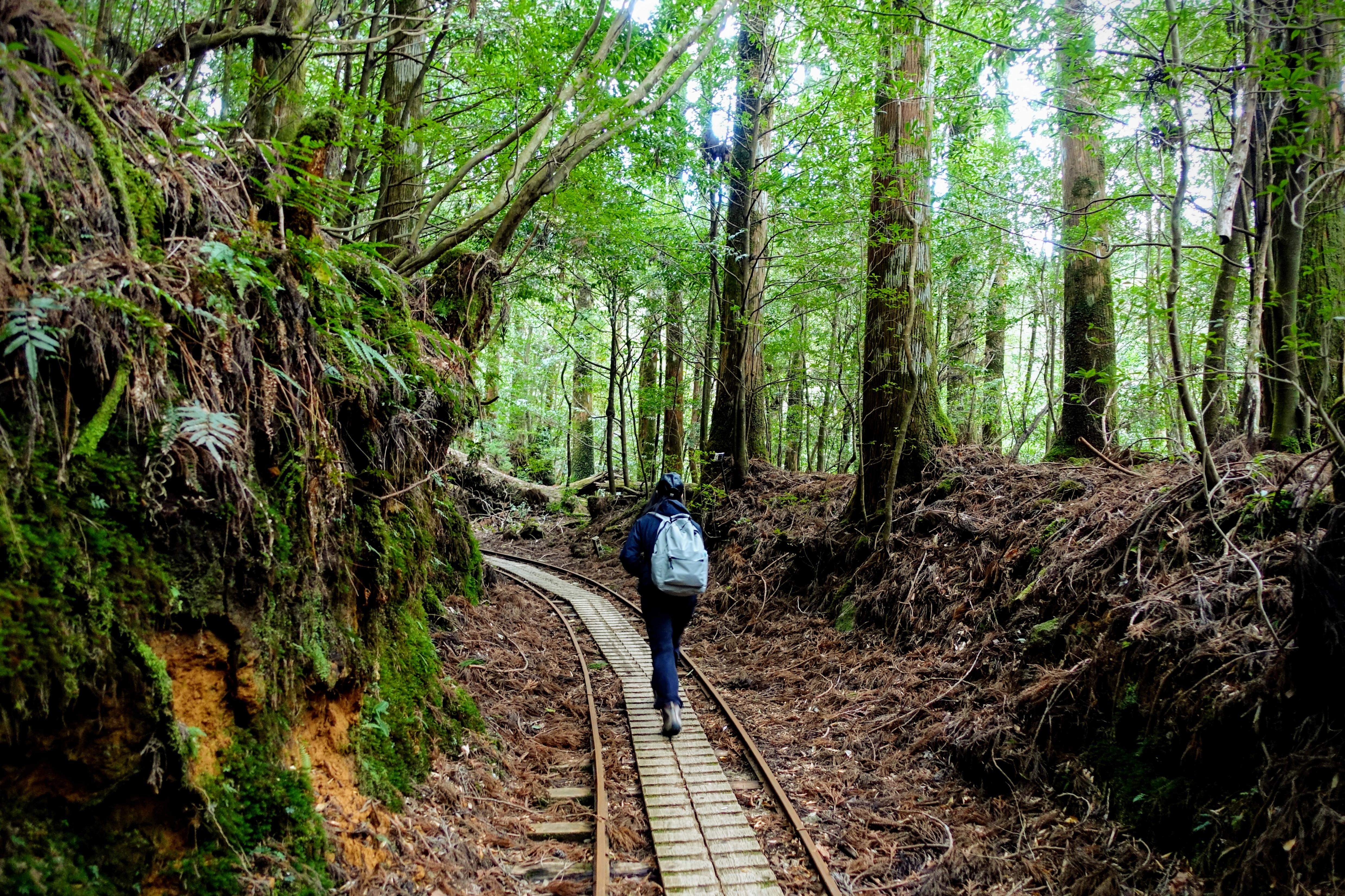 Journey to Jomon Sugi: Yakushima's Oldest Tree