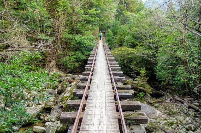 Yakushima - Jomonsugi Hike - Way home