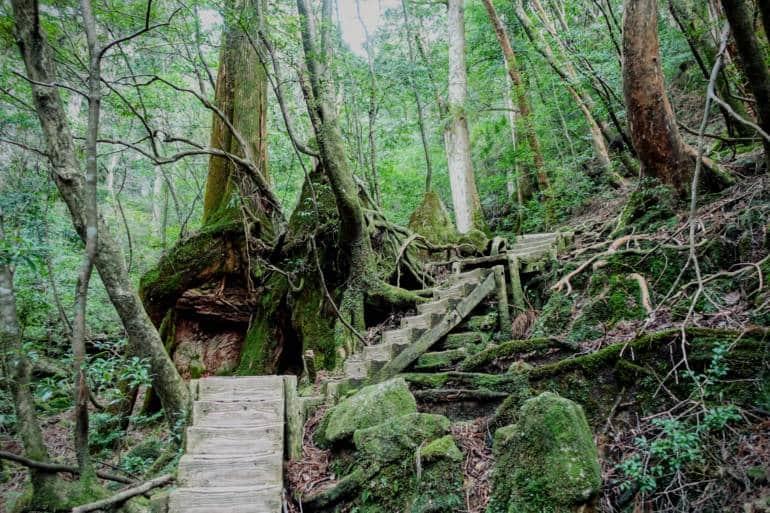Yakushima - Jomon Sugi - Okabu Trail