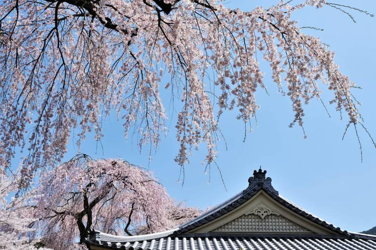 Daigoji in spring