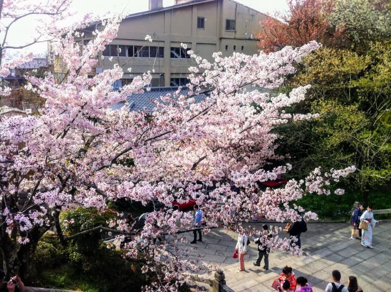 kyoto kiyomizudera cherry blossoms