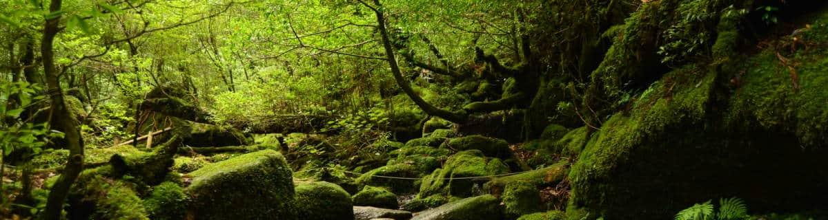 Yakushima Adventures: From Ghibli Hikes to Seaside Hot Springs