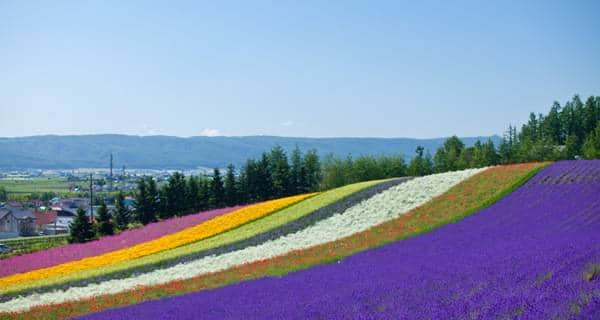 One-day Summer Sightseeing Tour of Hokkaido