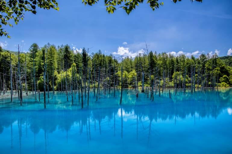 blue pond in biei,hokkaido japan.