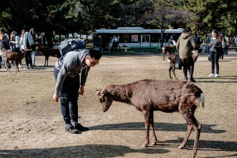 Nara Bowing Deer - travel phrases for traveling in Japan
