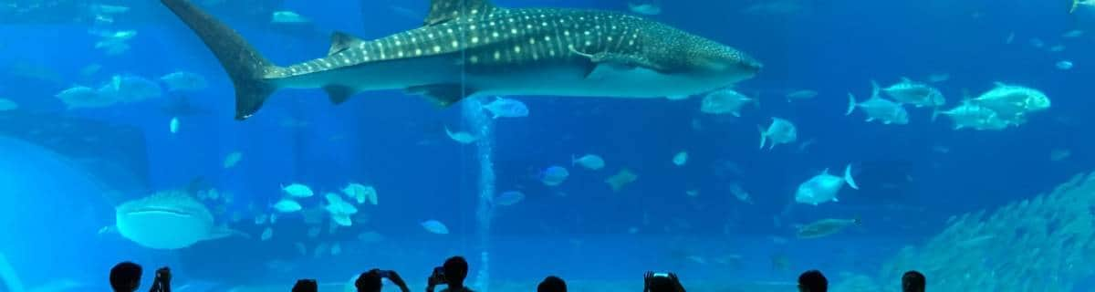 Okinawa Churaumi Aquarium: Underwater Beauty to Take Your Breath Away