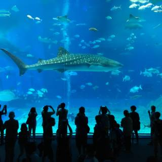 Okinawa Churaumi Aquarium: Underwater Beauty to Take Your Breath Away