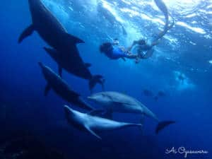 dolphins and snorkelers whale watching japan