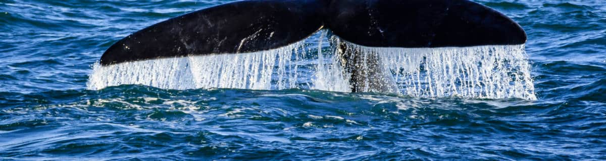 Whale Watching and Dolphin Swimming in Japan: Where to Go