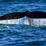 whale watching japan