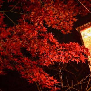 Karuizawa Momiji Festival