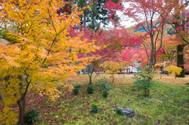 Kodaiji autumn