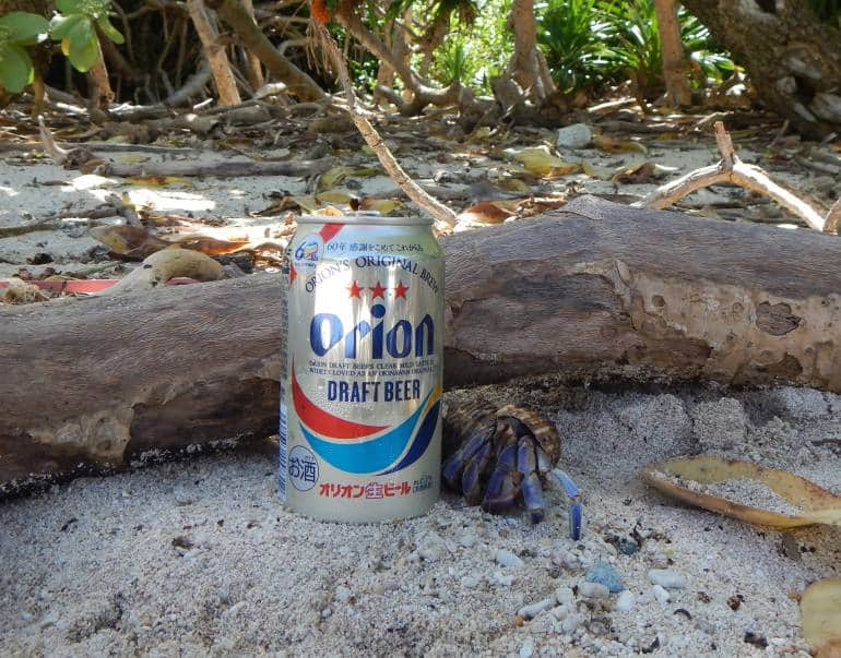 Huge hermit crabs love Orion Beer