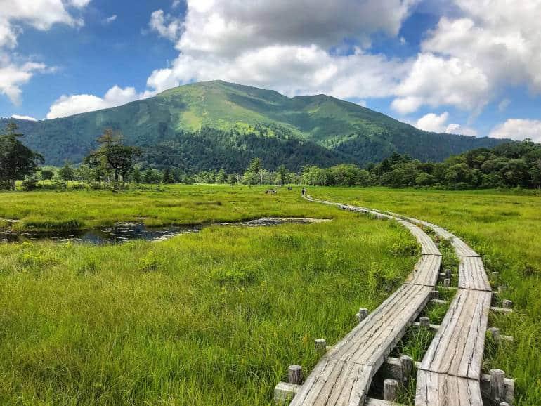 Oze Marsh, Gunma in the summer